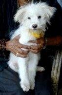 Stray Dog Adopted, Dharamshala