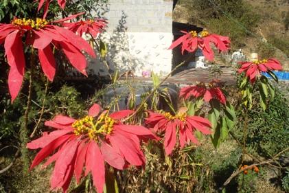 XMAS Dharamsala