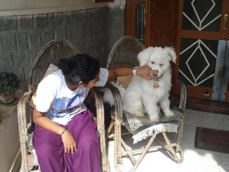 Animal Care, Vidya Niwas India