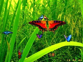 Joys of Butterflies