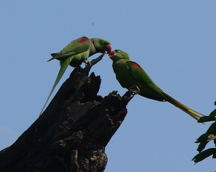 Birds of Haryana