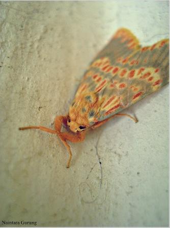Moth Life