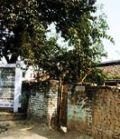 Motihari Bihar