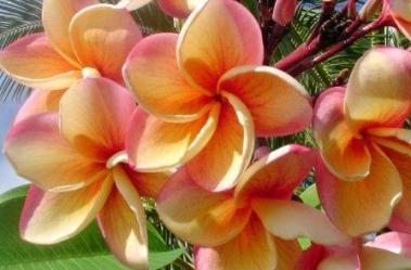 India Flora