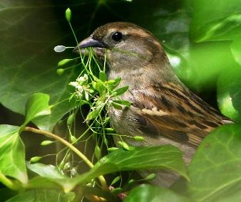 Sparrow India