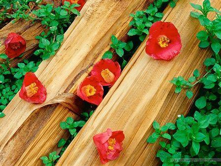 Spring India Flora