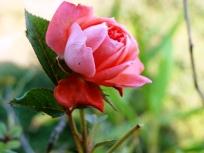 Spring Vidya Niwas