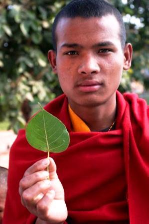 Bodhi Tree,Bodhgaya India