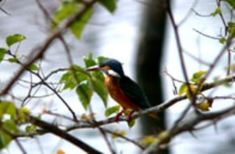 Uttranchal Birds