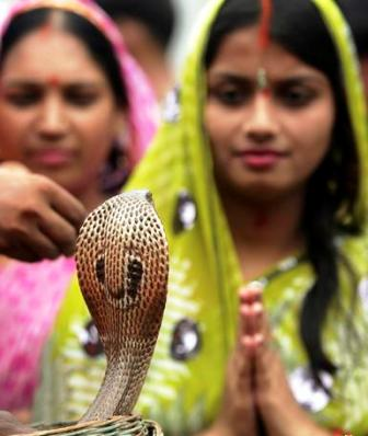 Snake India Worship