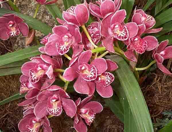 Orchid Valley Arunachal India