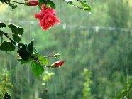 Monsoon Dharamsala